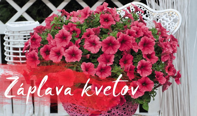 Záplava kvetov Potunia Strawberry Ice